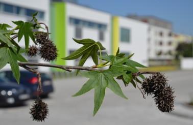Centrum Edukacji Międzynarodowej Racławicka 101